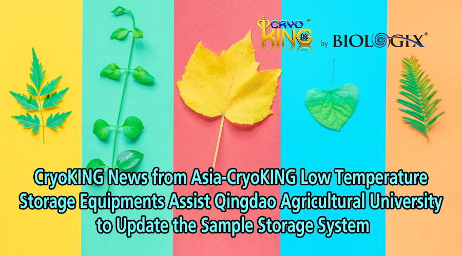 CryoKING News from Asia-CryoKING Low Temperature Storage Equipments Assist QAU to Update the Sample Storage System